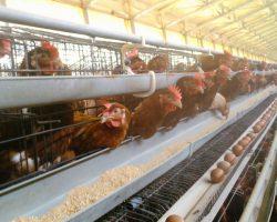 งานเกษตรปศุสัตว์_200618_0002