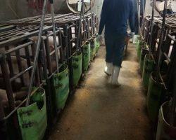 งานเกษตรปศุสัตว์_200618_0005