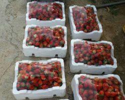 งานเกษตรเพาะปลูก_200618_0004