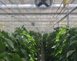 งานเกษตรเพาะปลูก_200618_0027