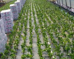 งานเกษตรเพาะปลูก_200618_0038