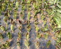งานเกษตรเพาะปลูก_200618_0039