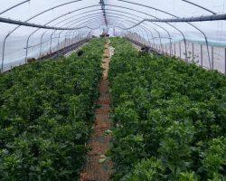 งานเกษตรเพาะปลูก_200618_0041