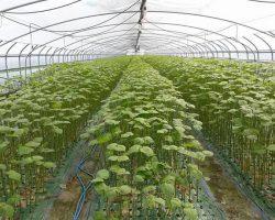 งานเกษตรเพาะปลูก_200618_0042