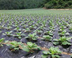 งานเกษตรเพาะปลูก_200618_0044